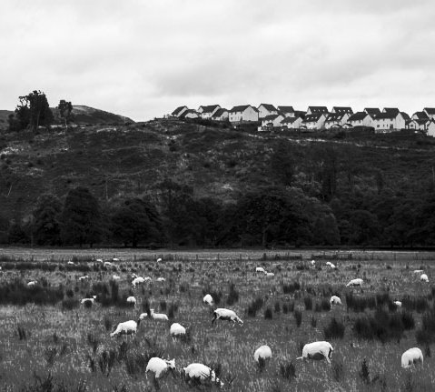 black and white image of goats, hills and houses